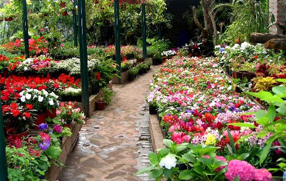 Garden%20Plant%20Viveros%20Las%20Palmas